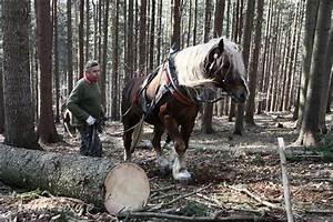 Prace kone