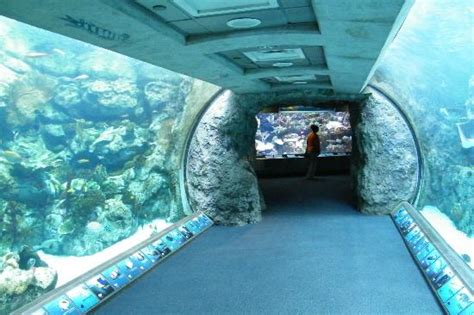 aquarium pacific aquarium of the pacific discount tickets