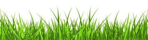 Grass Clipart Png Clipart Grass Danielbentley Me