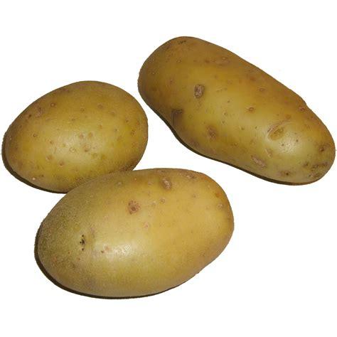 file pommes de terre png wikimedia commons