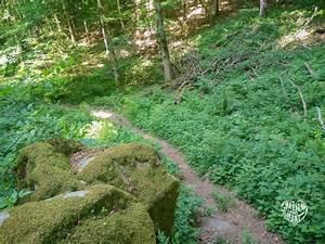 Werden Braune Zypressen Wieder Grün : mit gro en augen durch 39 s felsenland s deifel green ~ Lizthompson.info Haus und Dekorationen