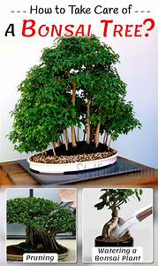 how to take care of a bonsai tree with necessary steps With how to take care of a garden