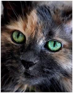 Pin by Noisy Nisroc on cats   Pinterest   Beautiful ...