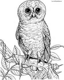 Adult Owl Coloring Pages to Print