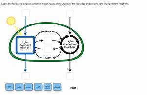 Solved  Label The Following Diagram With The Major Inputs