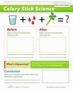 Celery Experiment | Worksheet | Education.com