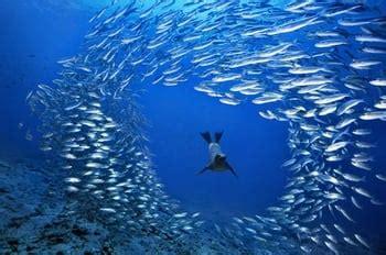 cuisine de francfort de mer des galapagos equateur