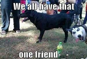 We all have that one friend... | Funny Animal Photo