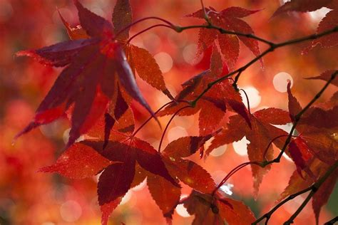 deco automne  faire soi meme avec des feuilles darbre