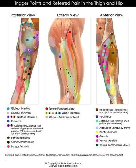 Pin on Muscles and Trigger Points