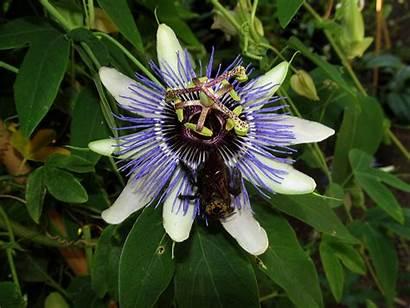 Purple Flower Alien Pollinators Jooinn Web Bloom
