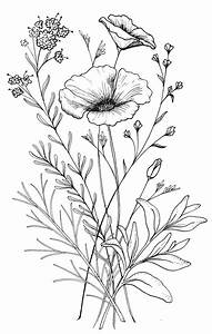 Different Kinds Of Flower Drawing Of Flowers Drawing ...