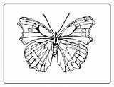 Coloring Moth Swift Designlooter Olds Pages sketch template