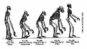 Evolution Diagram From Thomas Henry Huxley