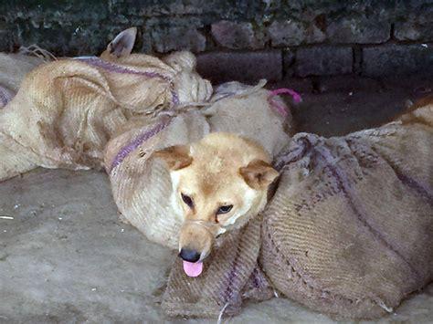 north korea  telling  starving citizens  eat dog