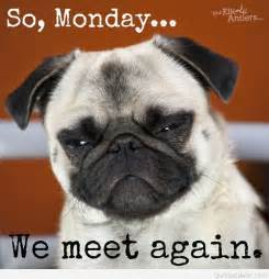 Funny Dog Monday Quotes