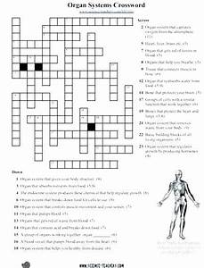 Digestive System Worksheets Middle School Free Human Body