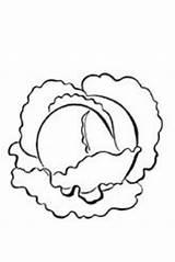 Coloring Cabbage Kindergarten Science Greens Doodles Collard 2639 sketch template
