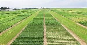 Corn Agronomy  Tillage And Crop Rotation Effects On Corn