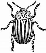 Insect Line Drawing Potato Bug Etc Clipart Getdrawings sketch template