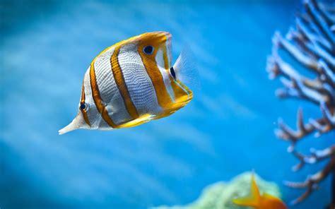 Fish Wallpaper HD Group (56
