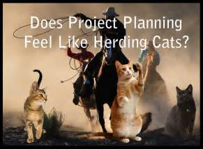herding cats be like herding cats idiom of the day the