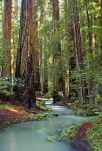 Mendocino County Redwood Stream