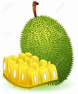 Jack Fruit Clipart