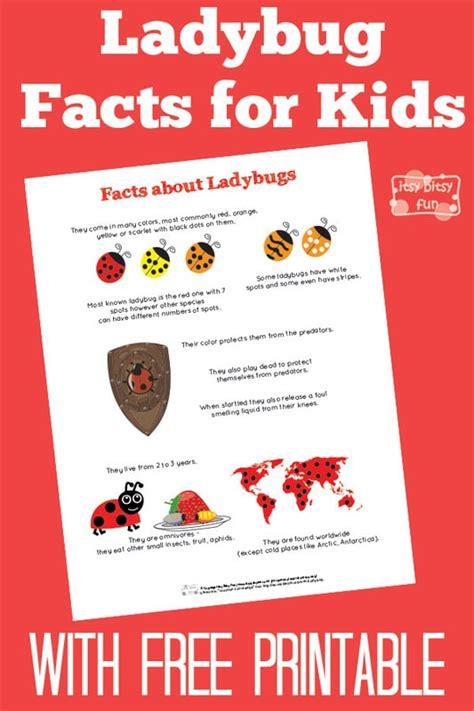 ladybug facts for itsy bitsy 651 | 3627531 orig 1