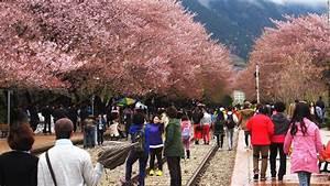 Forget North Korea, it's cherry blossom season