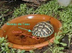 le pour tortue terrestre terrarium tortue terrestre pas cher