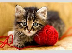 How Fast Do Cats Age? LoveToKnow