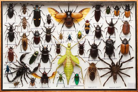 Average U.s. Home Harbors About 100 Types Of Insects
