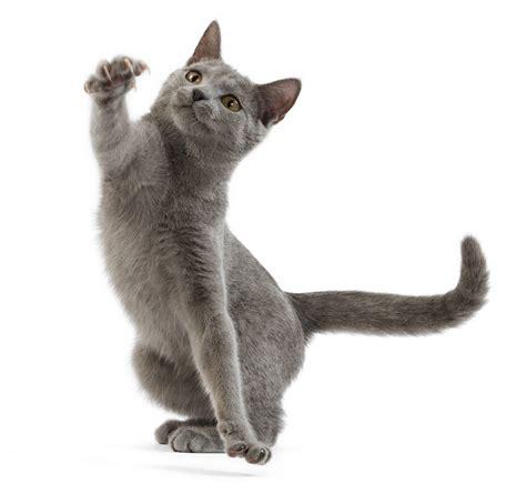 canapé pour bébé jouer avec chaton quels jouets pour chaton utiliser