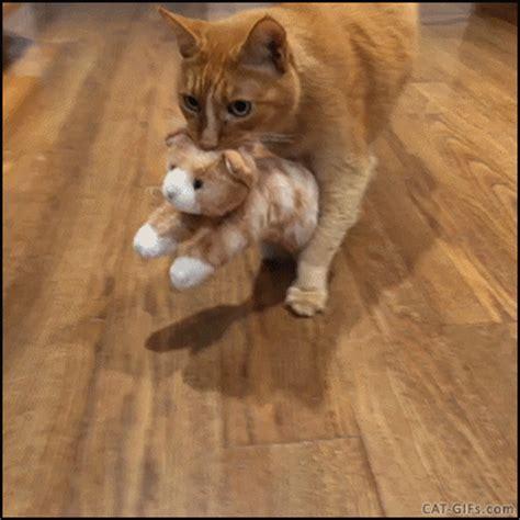 cute cat treats toy   kitten gif luvbat