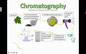 Chromatography (2016) IB Biology - YouTube
