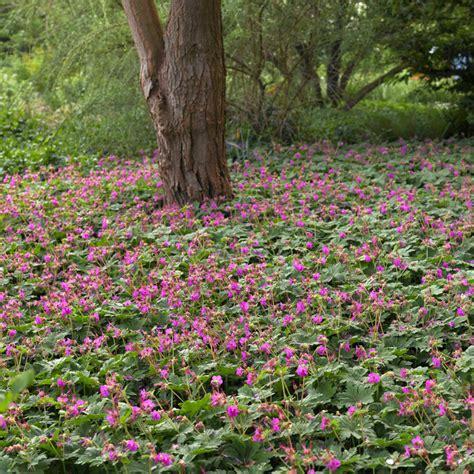 Blühende Pflanzen Schatten by Naturagart Shop Stauden Halbschatten Decke 25