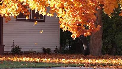 Falling Leaves Fall