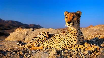 Jungle Animals African Amazing