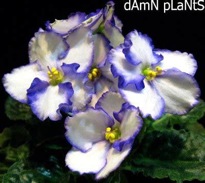 Geneva Flowers 17 plants are the strangest 8 17 08 8 24 08