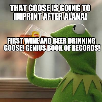 Alana Meme - meme creator that goose is going to imprint after alana first wine and beer drinking goose