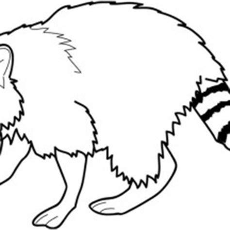 raccoon netart
