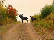 Diamond Rush NB Moose Hunt 2015 2016 YouTube