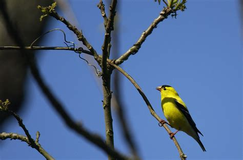 west virginia great backyard bird count at state parks