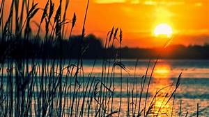 Crops, Sunset, Lake, 4k, Hd, Nature, Wallpapers