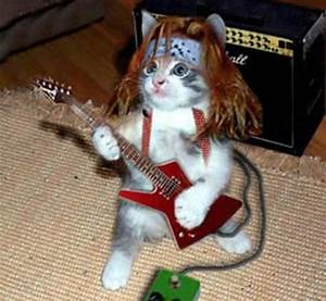 Funny Animals Playing Guitar - laughspark.com