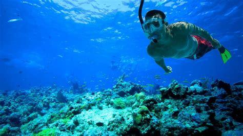 key west snorkeling coral reef snorkeling in key west