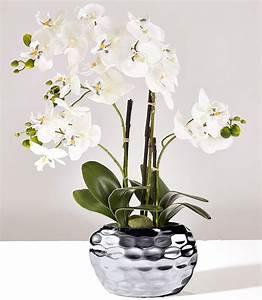 Künstliche Orchideen Im Topf : artikeldetails k nstliche orchidee im dekorativen topf h he ca 54 cm material qualit t ~ Watch28wear.com Haus und Dekorationen