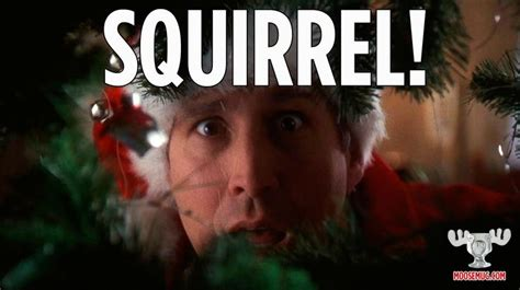 christmas vacation squirrel quotes
