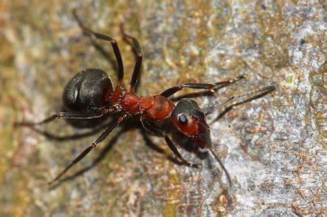 Kleine Rote Ameisen Im Garten 4271 by Ameisen Im Hochbeet Mamamia Heute Im Garten Korrigiere